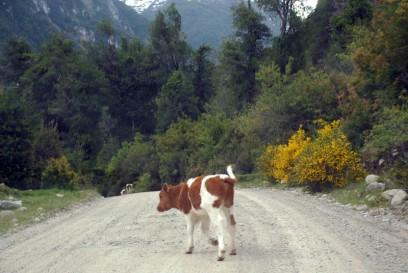 Ternerito cruzando la ruta